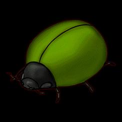 バクダンゴムシ