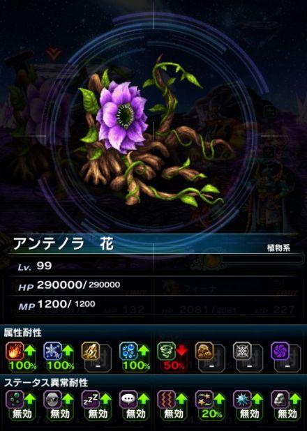 アンテノラ 花